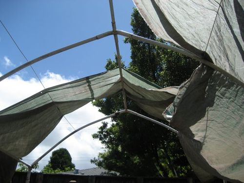 Bad canopy