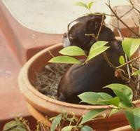 Sammie_planted